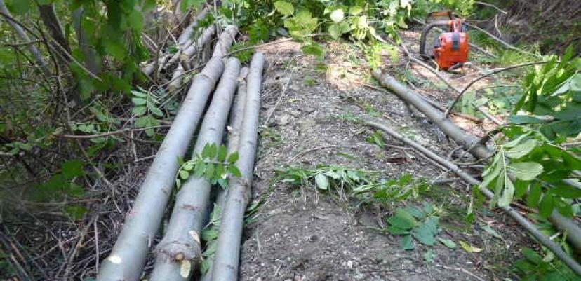 L'entretien du canal nécessite débroussaillage, élagage, broyage...