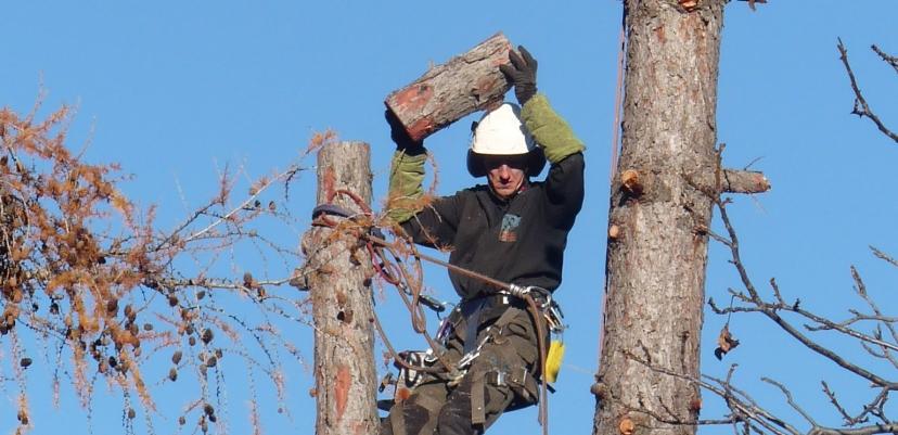 Les arbres ont été démontés sans rétention