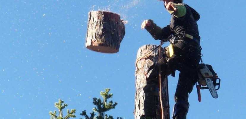 L'abattage de ces arbres a été décidé car aucune alternative satisfaisante n'était possible.