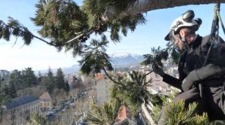 Nettoyage de bois mort dans un séquoia géant - Gap (05)