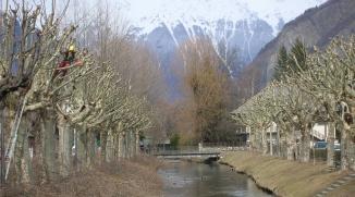 Taille architecturée d'un alignement de platanes - Bourg d'Oisans (38)